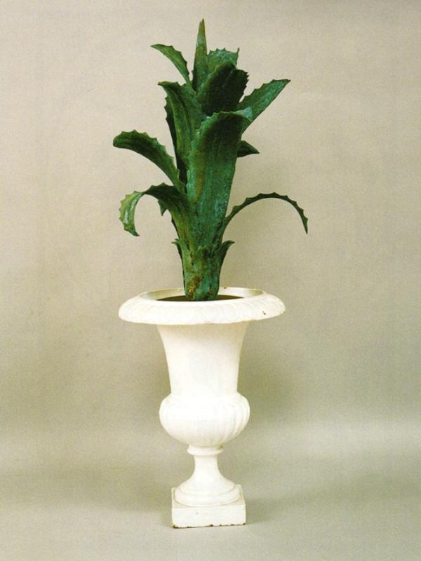 pianta agave cod92