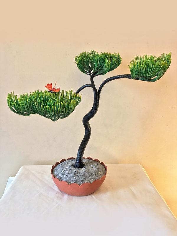 Bonsai pino cod239